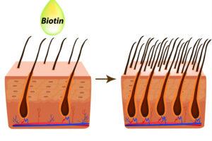 Cómo afecta la biotina al cabello